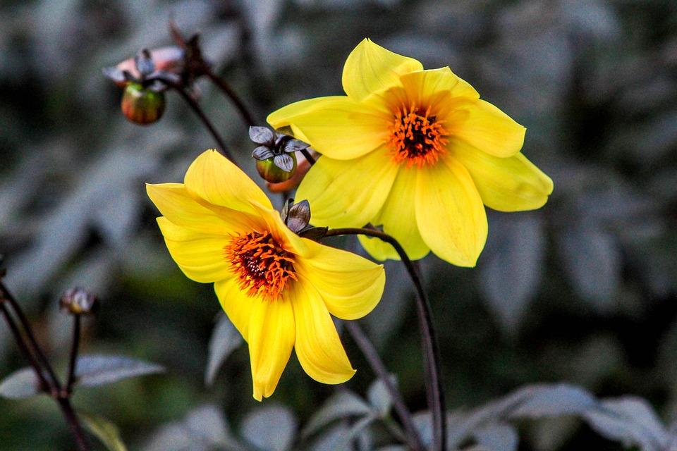 Flower, Nature, Flora, Leaf, Garden