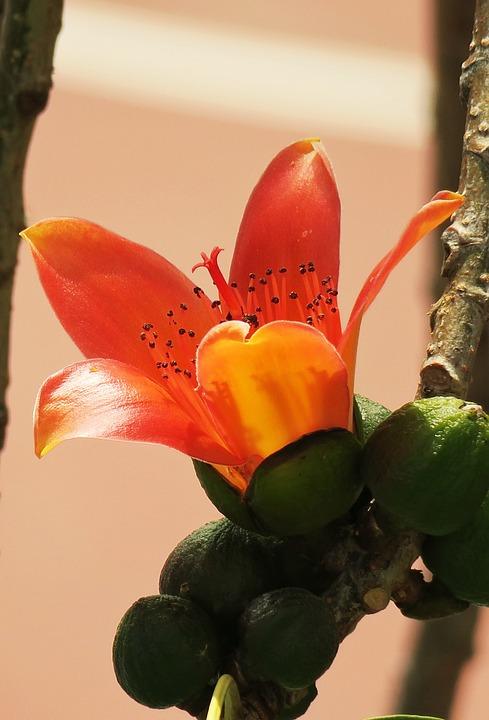 Nature, Plant, Leaf, Close-up, Flower, Garden, Fruit