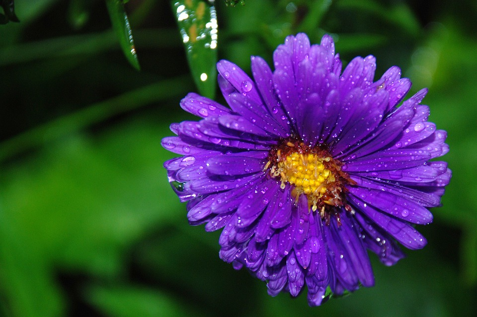 Flower, Bouquet, Leaf, Nature, Green, Water, Drop