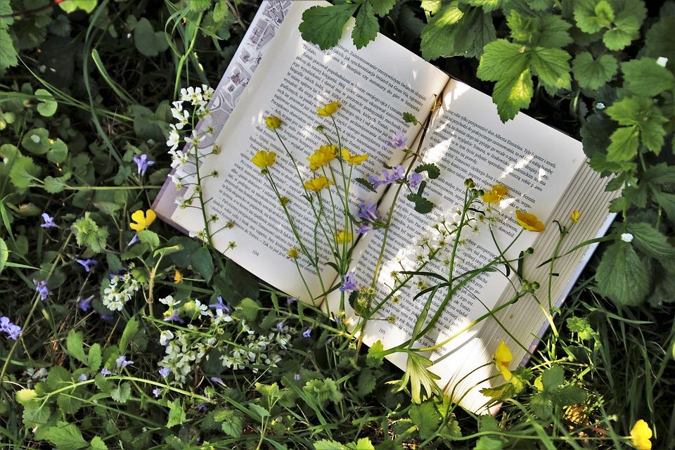 Reading, Plant, Nature, Leaf, Garden, Spring, Flower