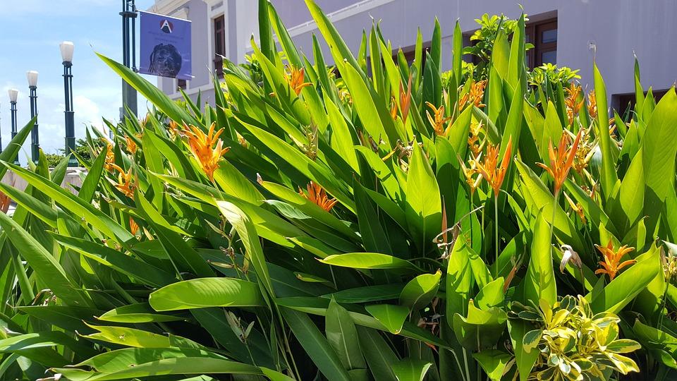 Flora, Leaf, Nature, Flower, Summer, Botanical