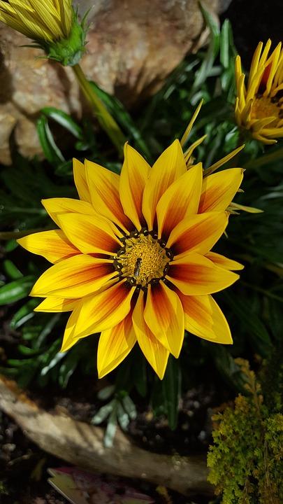 Nature, Flower, Plant, Garden, Leaf, Summer, Ice Plant