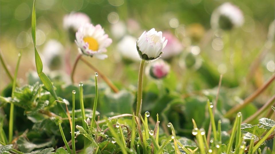 Free photo flower little flower grass white wild flowers max pixel wild flowers flower little flower white grass mightylinksfo