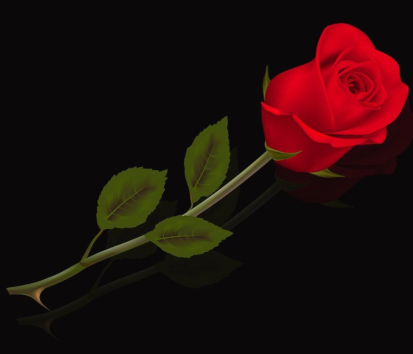 Flower, Leaf, Rosa, Love, Plant, Red Rose, Flowers