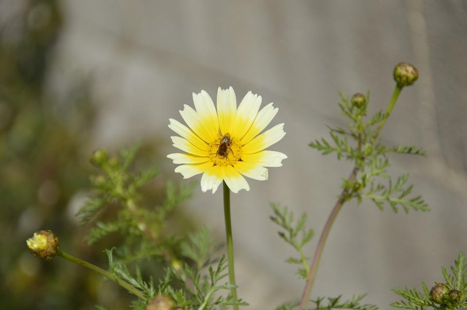 Bee, Flower, Pollen, Collects Nectar, Summer, Macro
