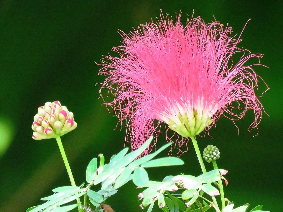 Macro, Flower, Garden