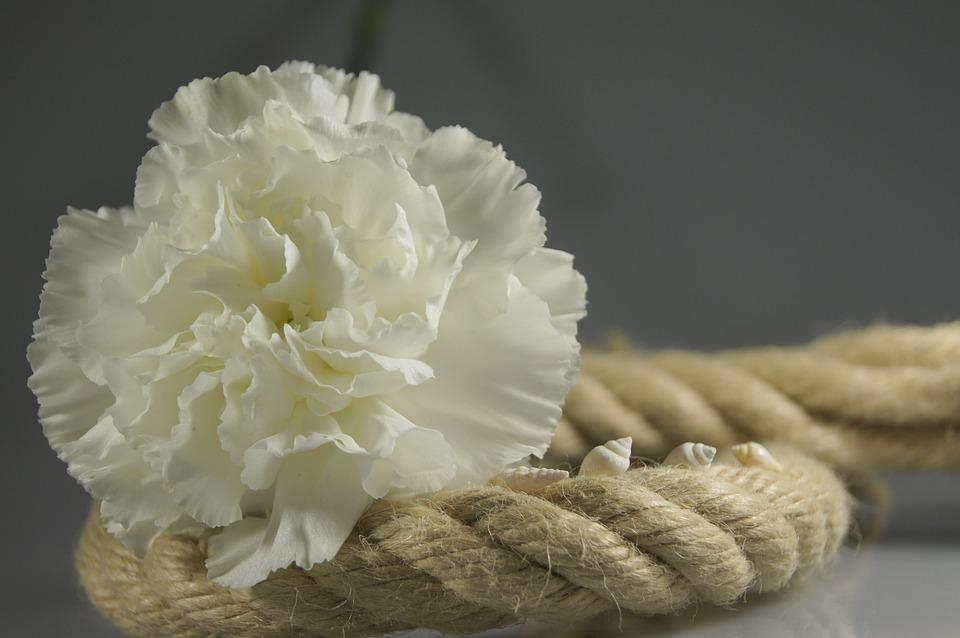 Rope, Flower, White, Map, Decoration