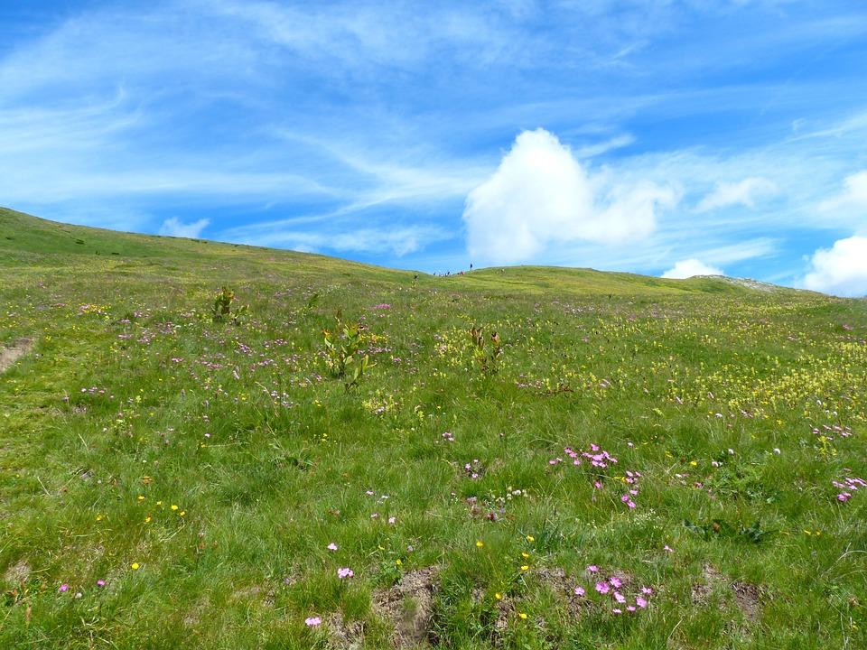 Mountain Meadow, Meadow, Grassy Slope, Flower Meadow