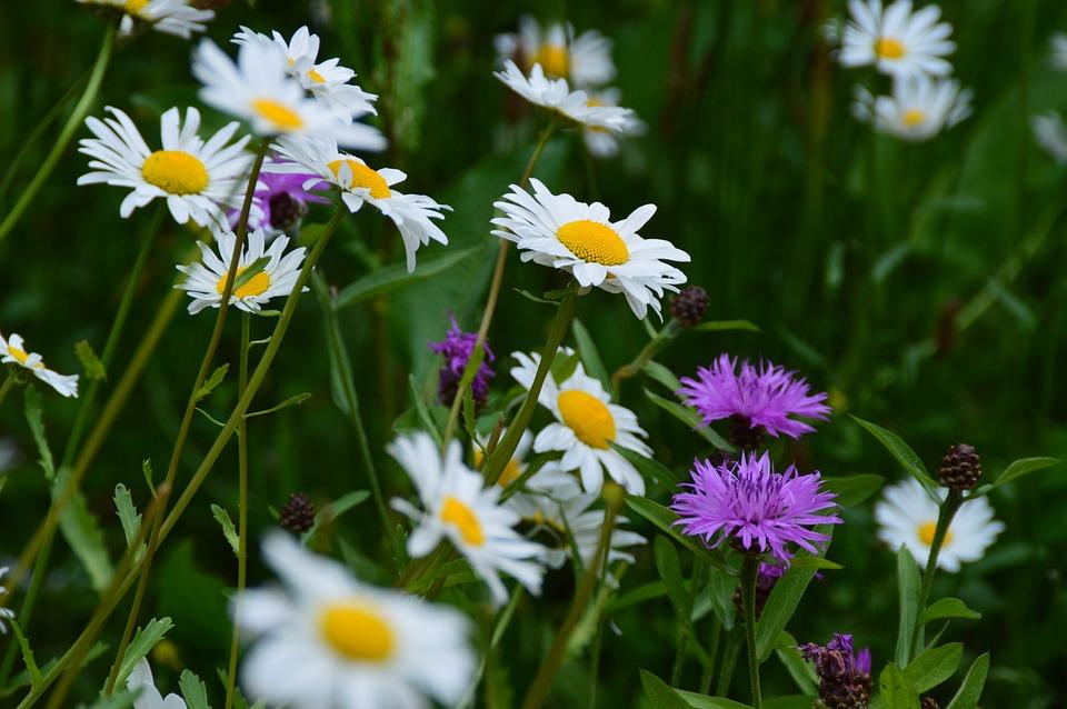 Flower Meadow, Flowers, Nature, Meadow, Garden, Flora
