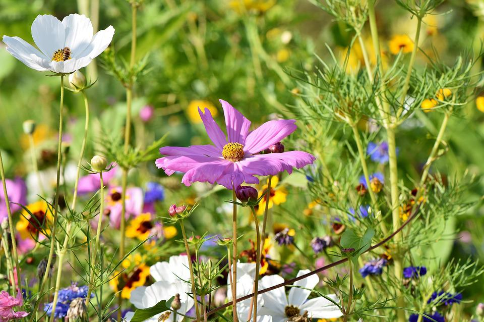 Flower Meadow, Flowers, Wildflowers, Wild Flowers