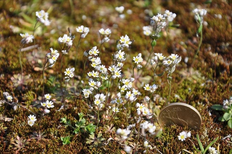 Moss, Flower, Nature