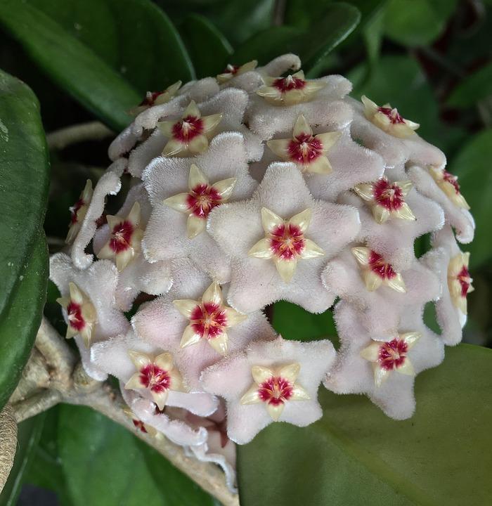 Flower Mother-of-pearl, White Flower, Flower