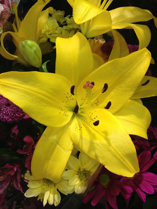 Lily, Flower, Yellow, Blossom, Floral, Natural, Petal