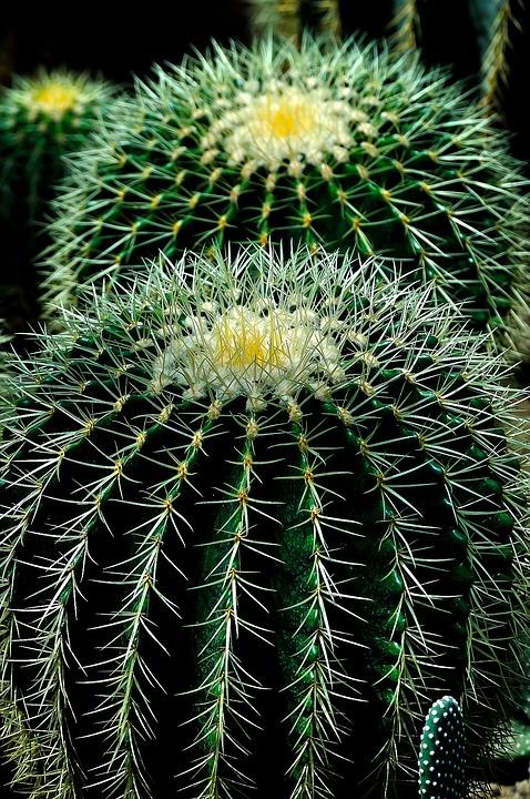 Cactus, Plant, Circles, Nature, Green, Flower, Natural