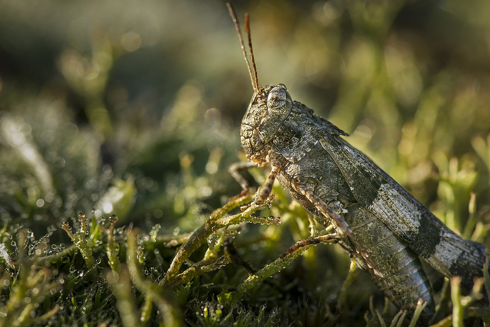Animals, Animal, Mammal, Nature, Grasshopper, Flower