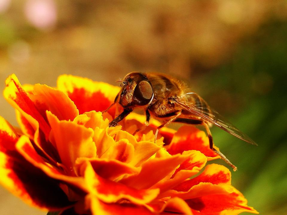 Nature, Flower, Closeup, No One, Plant, Animals, Insect