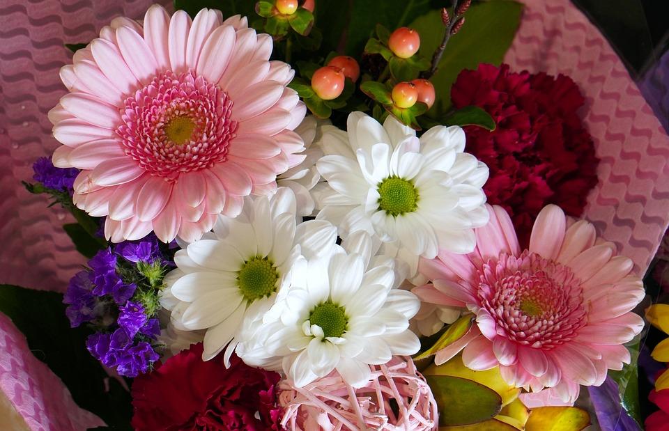 Gerbera, Flower, Blossom, Bloom, Nature, Flora