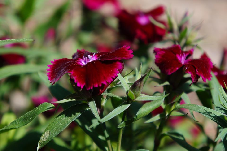 Nature, Flower, Flora, Leaf, Garden, Blooming, Color