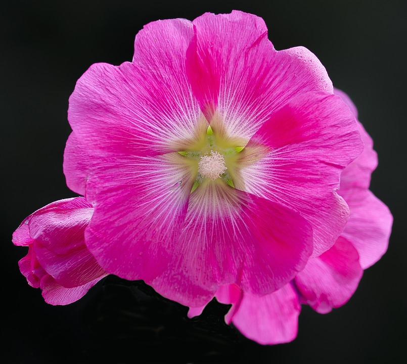 Flower, Petal, Nature, Floral, Blooming