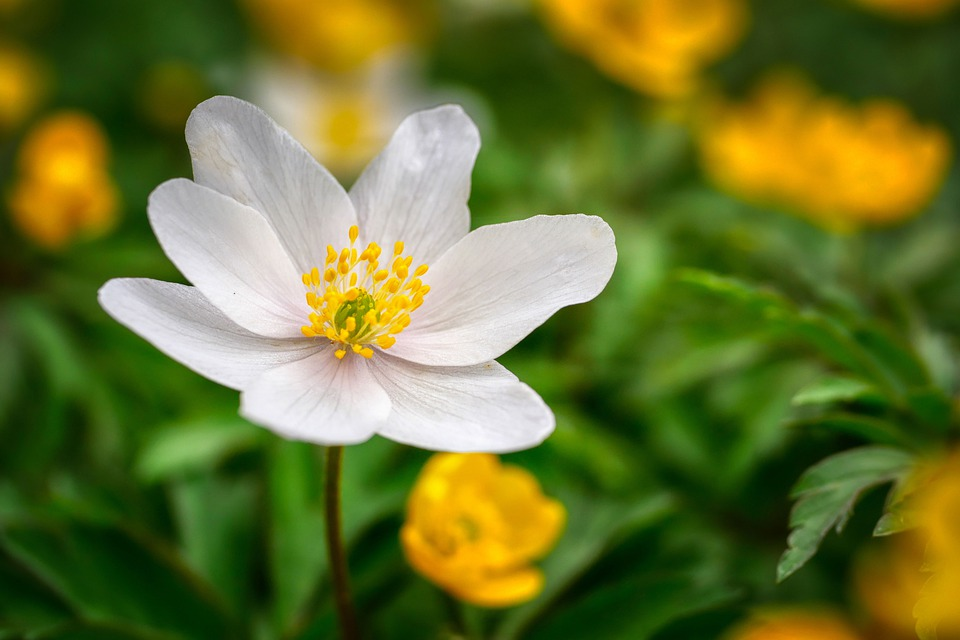 Flower, Spring, Nature, Flora, Blossom, Bloom