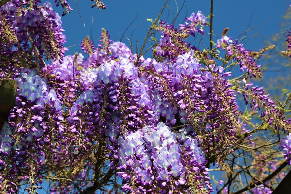 Flower, Nature, Plant, Spring, Tree, Flowers, Bud