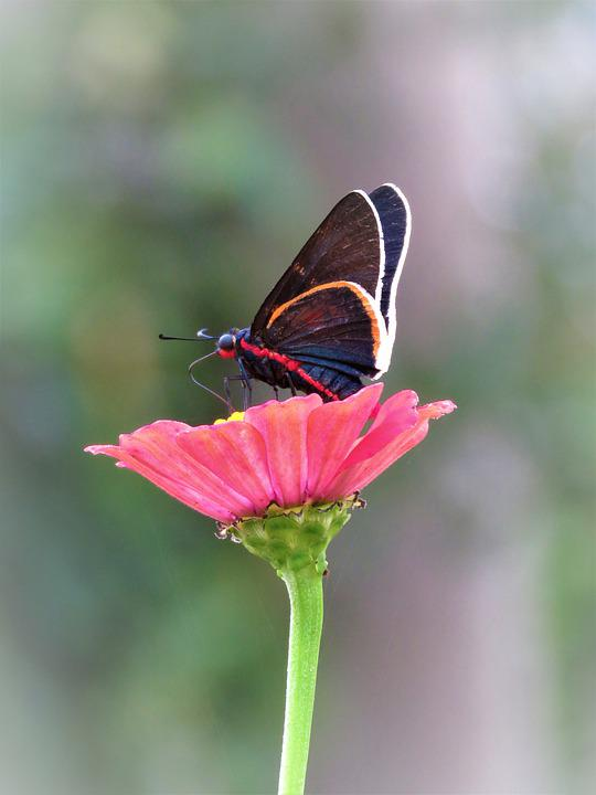 Butterfly, Flower, Insect, Garden, Nature, Bloom