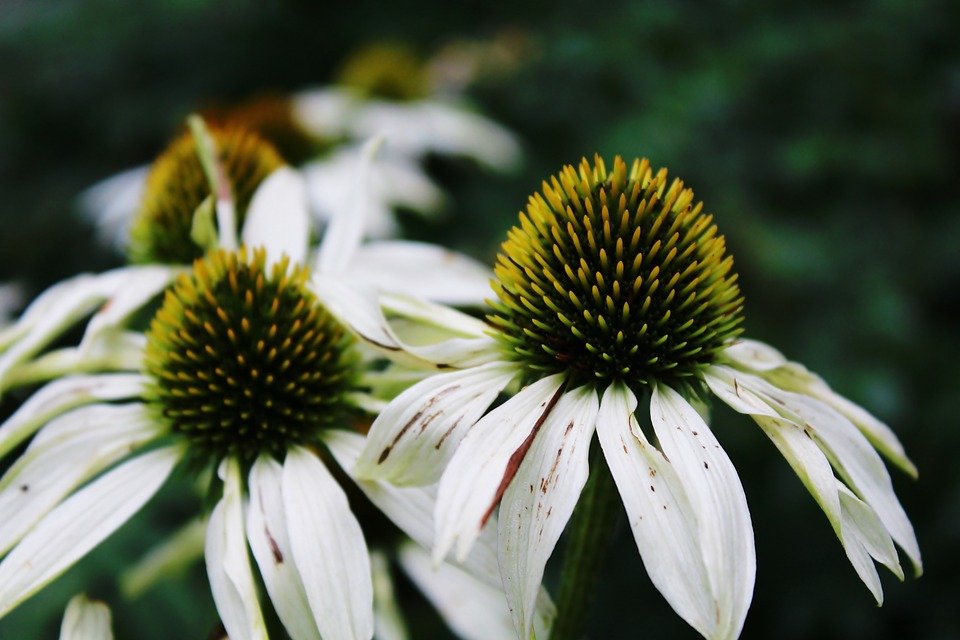 Flower, Nature, Garden, Close, Blossom, Bloom, Flora