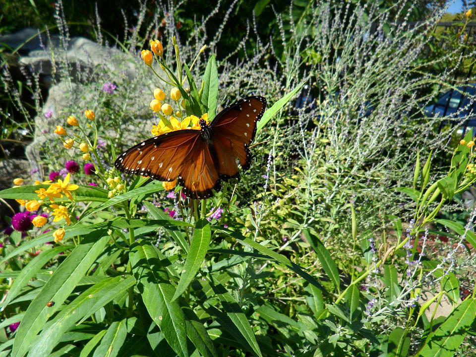Nature, Flower, Flora, Summer, Garden, Butterfly