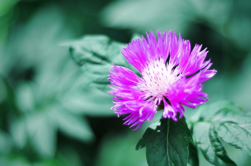 Flower, Spring, Summer, Flora, Petals, Bloom, Nature