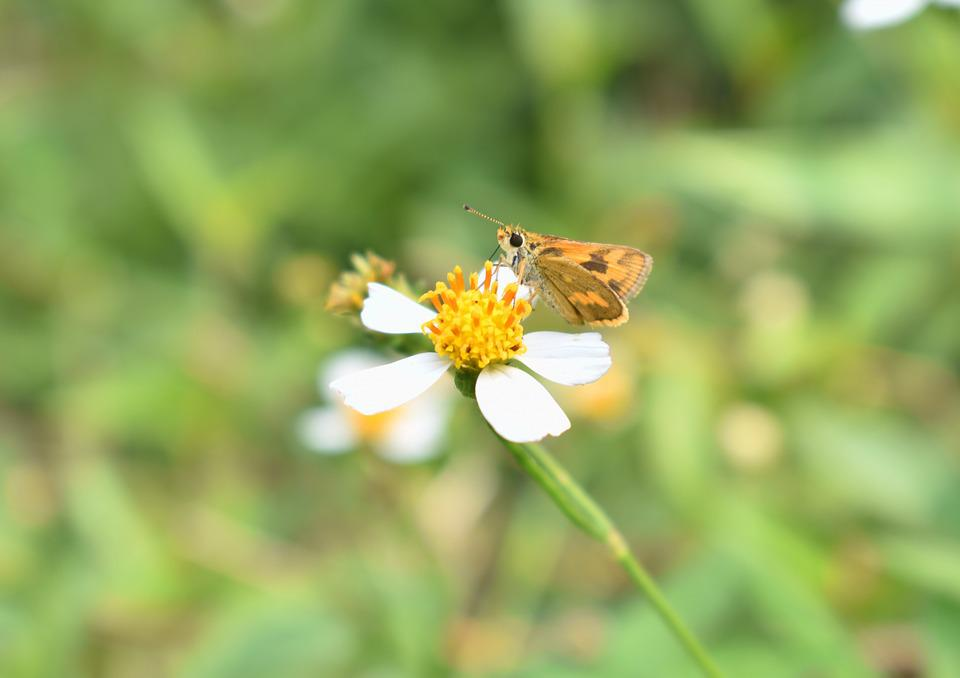 Butterfly, Flower, Nature, Insect, Floral, Summer, Leaf