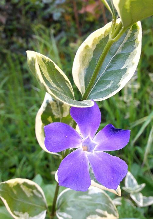 Flower, Nature, Flowering