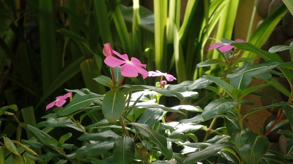 Nature, Flower, Garden