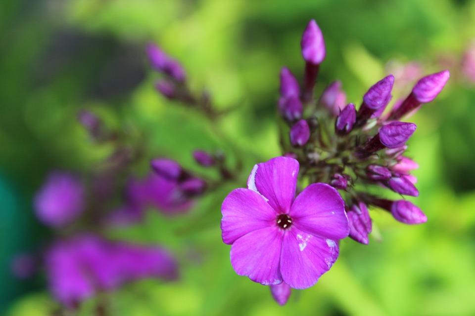 Flower, Nature, Garden