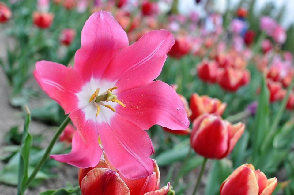 Flower, Nature, Garden, Plant