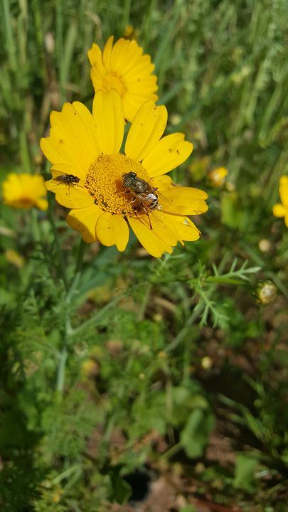 Nature, Summer, Flora, Flower, Field, Hayfield, Season