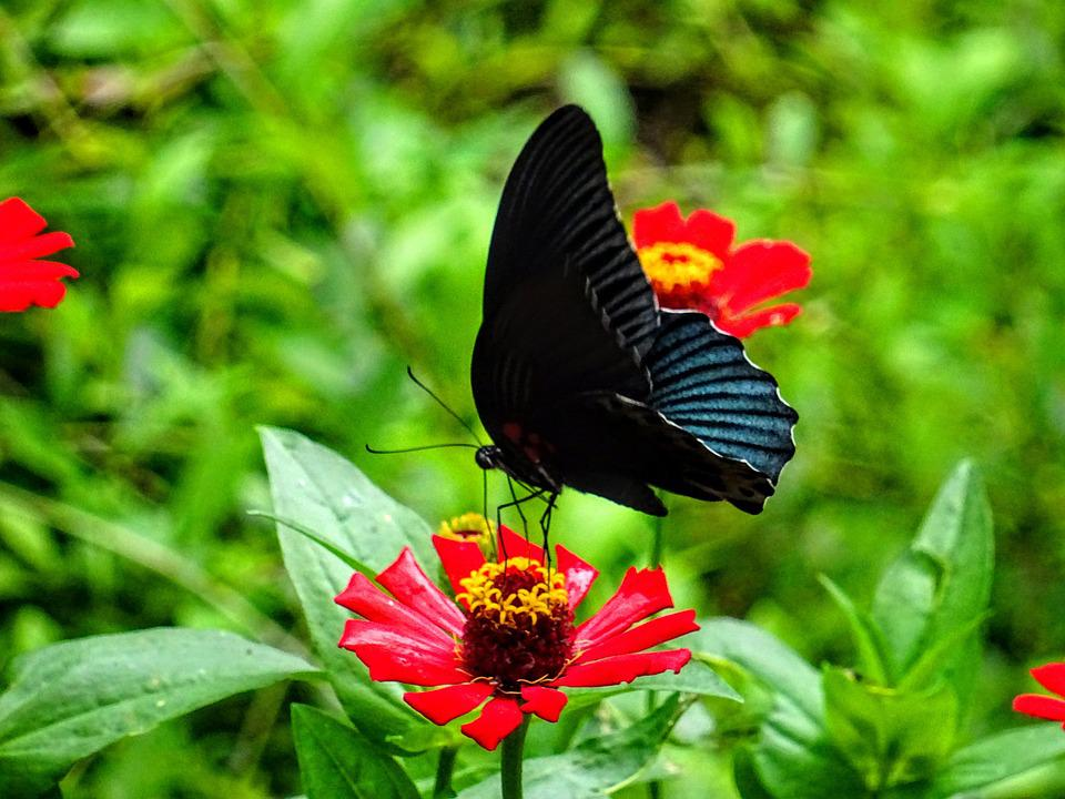 Butterfly, Flower, Insect, Animal, Butterflies, Nature