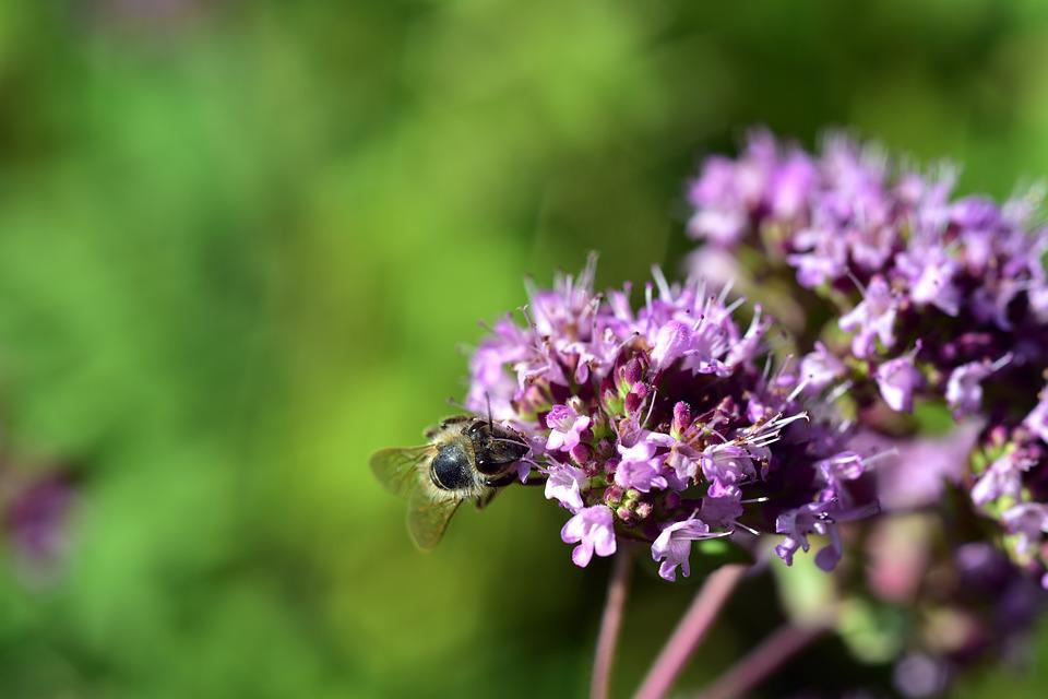 Blossom, Bloom, Bee, Insect, Flower, Nature, Plant