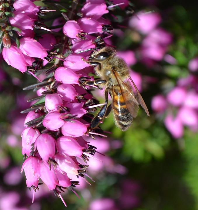 Insect, Flower, Nature, Outdoors