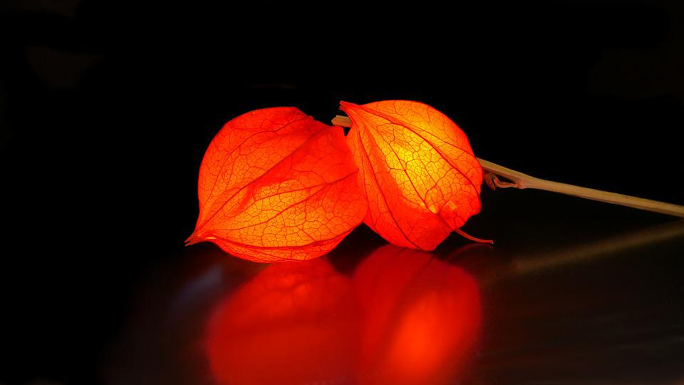 Physalis, Lampionblume, Flower, Orange, Nature