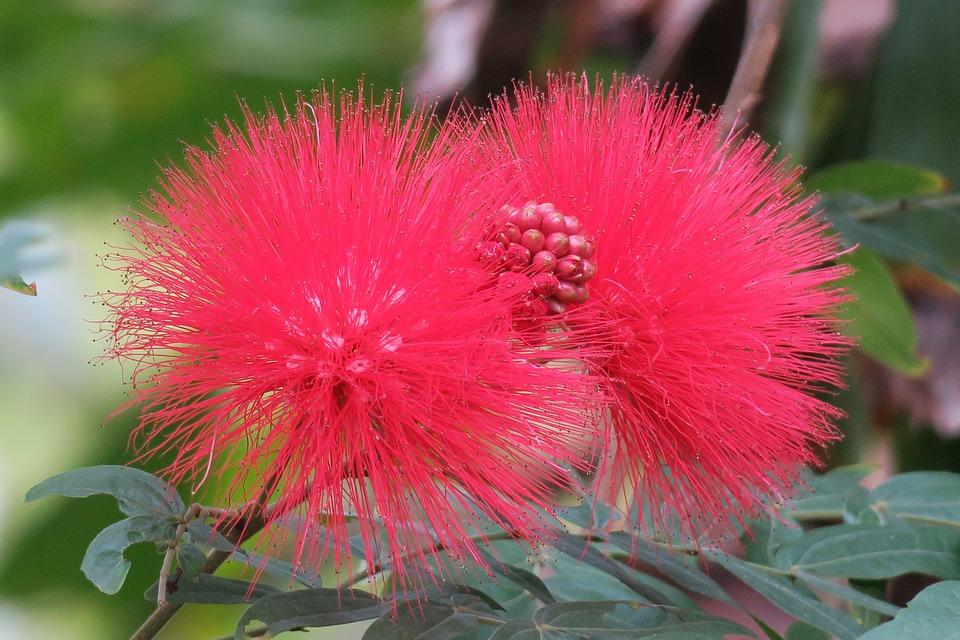 Nature, Plant, Flower, Leaf, Garden, Close-up, Light