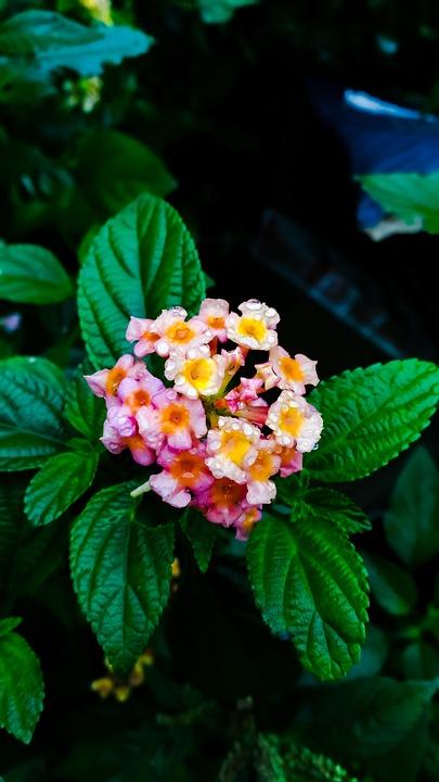 Nature, Leaf, Flower, Flora, Garden