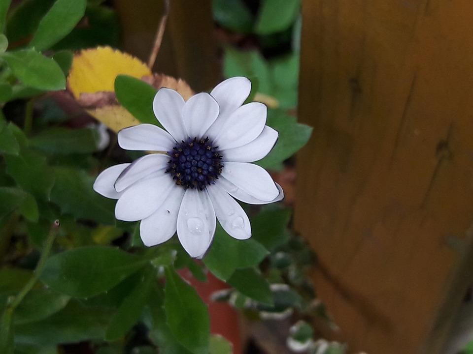 Flower, Nature, Summer, Plant, Garden, Natural, Green