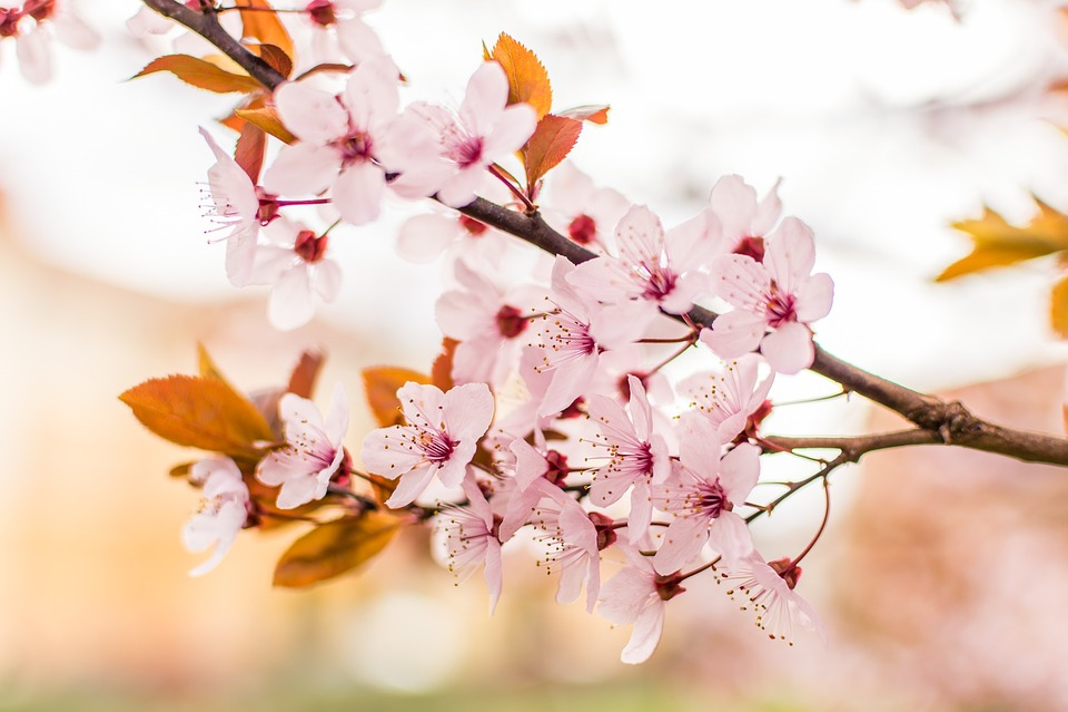 Pink, Petal, Flower, Nature, Plants