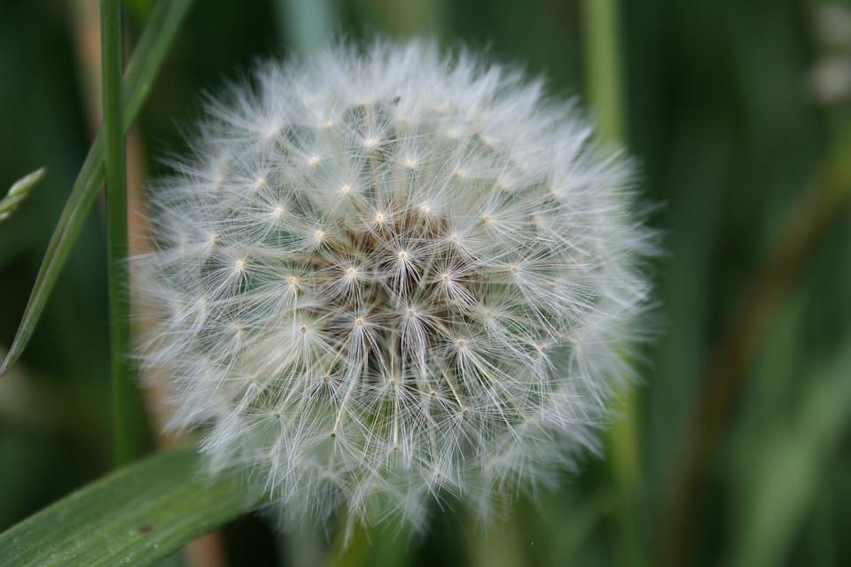Flower, Petal, Pistil, White, Nature