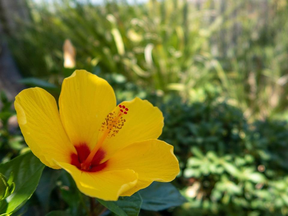 Flower, Close Up, Nature, Orange, Petals