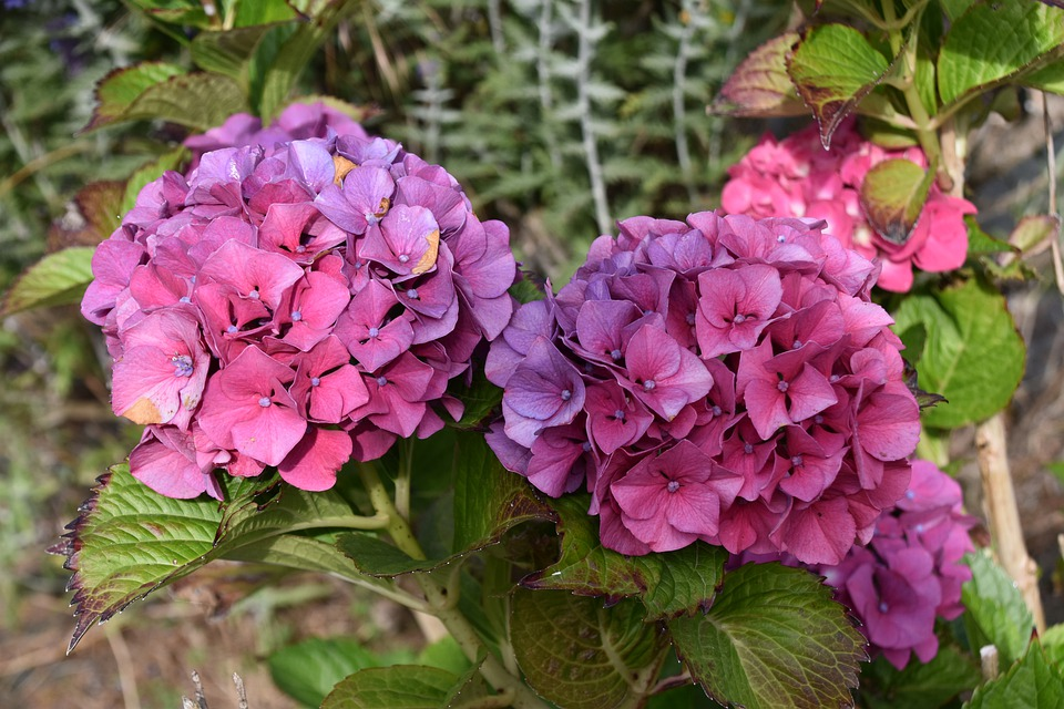 Flower, Plant, Petals, Garden, Nature