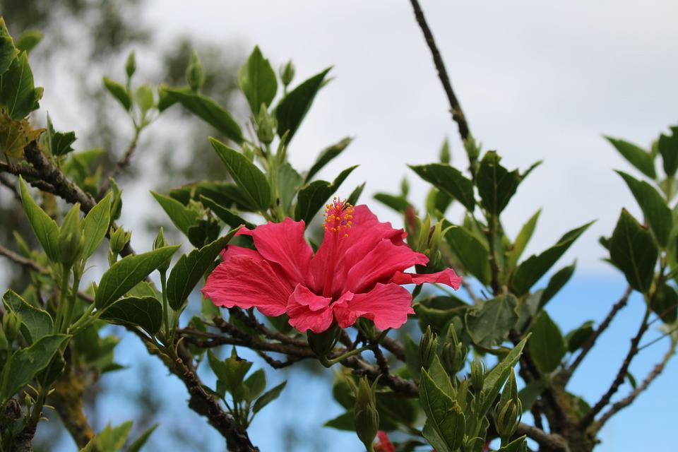 Plant, Nature, Leaf, Flower, Tree, Petal, Floral, Color