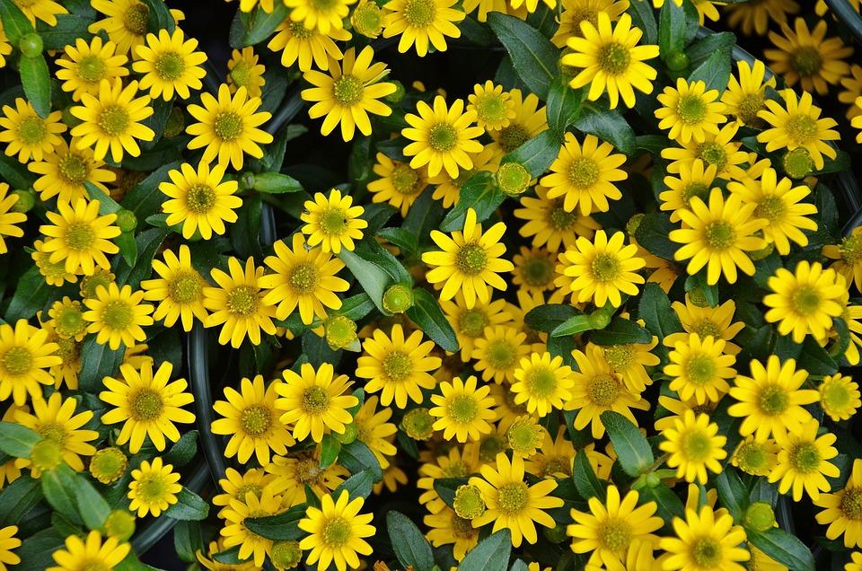 Flower, Plant, Nature, Yellow, Flora
