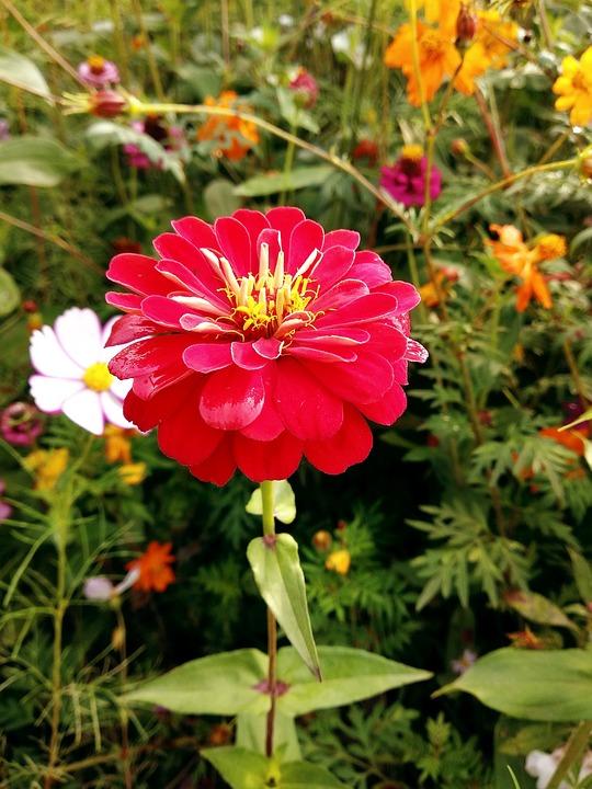 Flower, Nature, Plant, Garden