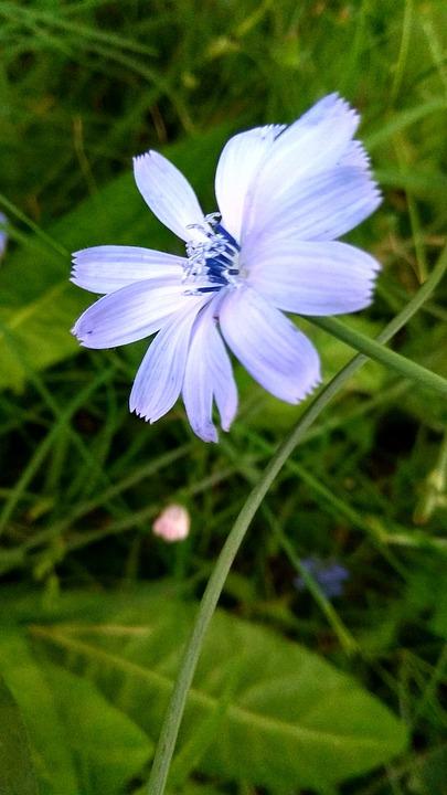 Nature, Plant, Flower, Summer, Lawn